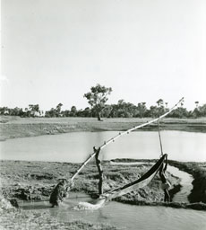[An Irrigation Pump]