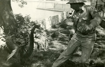 [A Goose Chases the Photographer in the Zoological Gardens]